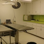 exam room in vet clinic with green wall